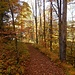 Goldige Herbstfarben