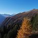Herbstfarben auf der Belalp