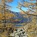 Il Lago Bianco fra i larici