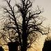 dieser Baum ist schon bereit für den (verdammten) Winter