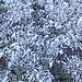 Gut sortiertes Dolomit-Gestein