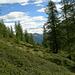 durch Lärchenwald Richtung Corte di Sopra