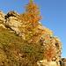 Leuchtendes Lärchengold über herbem Wacholdergrün am unteren Stüell ENE-Grat