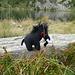 Mammut am See