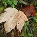 Herbst allenthalben
