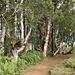 wir durchstreifen einen Mix von Waldabschnitten auf kurze Distanzen