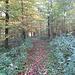 anfangs flach ein wenig am Waldrand entlang....