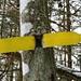 originell, hübsch fürs Auge - weniger für den Baum ...