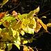Herbst, die schönste Jahreszeit