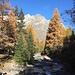 Herbstwald an der Baumgrenze