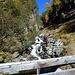 nach dieser Brücke führt der Weg in den Lärchenwald