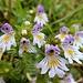 ... mit Blüten von exzellenter Schönheit