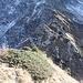 <b>Osservo la frastagliata e poco conosciuta cresta NW del Poncione di Tremorgio. Il sole e la temperatura mite mi invitano a raggiungerla. Man mano mi alzo di quota, mi rendo conto che il versante non è per niente banale. L'erba è tuttavia asciutta: con il prezioso aiuto dei bastoncini riesco a guadagnare il crinale a 2240 m di quota. </b>
