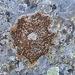 Auf den Felsen lassen sich Flechten in verschiedenen Farben finden.
