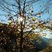 wunderschöne Herbststimmung im Abstieg nach Schnepfegg
