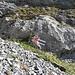 Der Einstieg des Schnüerliweges befindet sich vor dem Valsloch bei dieser deutlichen Markierung zwischen dem Chammsässli und dem Chäserrugg auf ca. 1830 m ü. M.