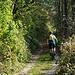 Zuerst verläuft die Auffahrt noch schattig im Wald