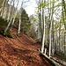 Ab Linthal steiler Aufstieg über Waldwege bis Nussbühl.