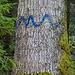 Baummarkierung: Biotopbaum?