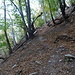 guter Weg durch den Wald