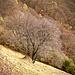 Baum nahe Pianche