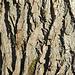 Strukturen am Baumstamm