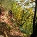 ...in den malerisch-romantischen Wald.