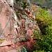 Die beiden ersten Kletterpassagen sind zwei Sandsteinwände links oberhalb des Pfads.
