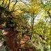Wunderschöner Herbstwald.