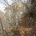 Kurz vor dem Erreichen des Wiesenkars wird der Pfad sehr schmal an dem stark abschüssigen Hang.