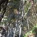 Zweite Leiter zur Alp Lida