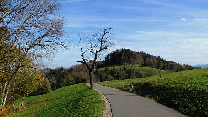 Ein Bild, das Gras, Baum, Himmel, draußen enthält.  Automatisch generierte Beschreibung