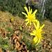 Gelbe Blumen ;-)