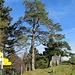 Hier an der Laubbergscheune verließ ich aus Zeitgründen den Kamm und stieg links runter nach Wiesen ab. Man könnte aber auch noch ca. 3,5 km auf dem Kamm bleiben und von der Schlosshöchi über Rupplingen nach Wiesen gelangen, wie von [u Kaj] hier beschrieben<br /><br />[tour98406 WiesenTour auf Schnebelhorn & Schlosshöchi]