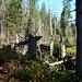 der letzte Sturm hat viele morsche (vom Borkenkäfer und Sturmschaden geschädigt) Bäume gefällt und versperrt teilweise auch den Wanderweg, deshalb sollte man bei Sturm diese Wanderwege und den Wald meiden.