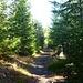 nach den großen Sturmschäden und Borkenkäferbefall wächst nun ein kräftiger junger Wald nach