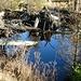 Natur pur, durch eine natürlich Stauung des Wasser entstand hier ein kleiner Weiher
