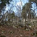 ...habe einen kurzen Abschnitt erkundet. Waldboden und Gestein waren mir zu feucht, um den mir unbekannten Eselsrücken zu überschreiten. Ich kann mir das aber im Sommer sehr gut mal vorstellen.