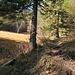 an dieser Stelle ist die Goggeien-Abzweigung, hier verlasse ich den Wanderweg und gehe alles den Wegspuren nach durch den Wald bis auf den Goggeien Hauptsattel, Markierungen hat es im Wald keine mehr, die Wegspuren sind aber gut zu finden, wenn es nicht allzu viel Laub auf dem Weg hat.