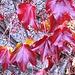 Herbst und nicht Plastik
