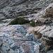Im Abstieg zwischen Lac du Cinto und Refuge de l'Erco - Zwischendurch sind immer wieder steilere Stufen zu überwinden, wobei es offenbar mitunter auch mehrere Weg-Varianten gibt.