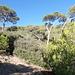 Blick über den sentier du littoral in den bewaldeten zentralen Bereich der Halbinsel.
