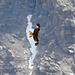 Rotmilan über Alp Anarosa.