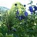 Blumen in Voderstoder