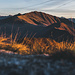 der Grat leuchtet golden im Morgenlicht. Wir nehmen alle Gipfel auf dem Weg mit. Der Weg führt sonst eigentlich unter diesen vorbei.