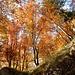 Herbstgold an der Rigi