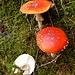 ... und weitere schmucke Pilze