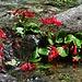 Wasserblumen