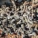Reste von Wurzelstöcken auf Lager