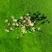 Blumen im Moosteppich